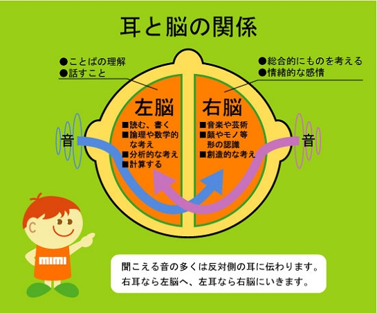 耳と脳の関係
